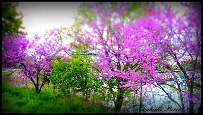 Poster featuring the photograph Pretty In Pink Spring Blossoms by Danielle  Parent