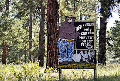 Protect Our Forests  Poster by Juls Adams