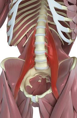 Psoas Major Poster by MedicalRF.com