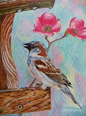 Ptg   Sparrow With Pink Dogwood In The Rain Poster by Judy Via-Wolff