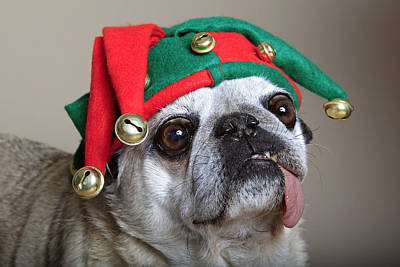Pug With Christmas Jester Hat Poster by Mlorenzphotography