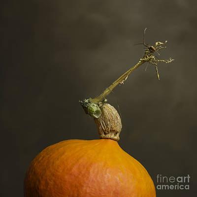 Pumpkin Poster by Bernard Jaubert