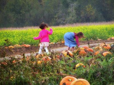 Pumpkin Picking In Maine Poster by Josie Dupuis