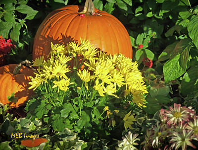 Pumpkins And Mums Poster