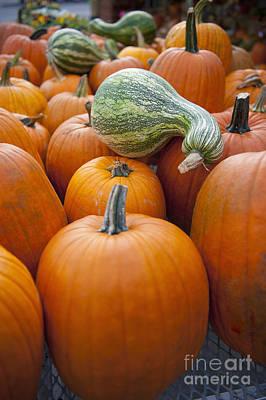 Pumpkins For Sale Poster