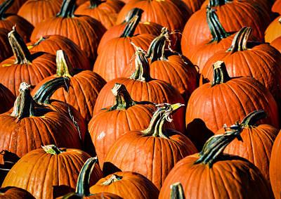 Pumpkins Galore Poster by Julie Palencia