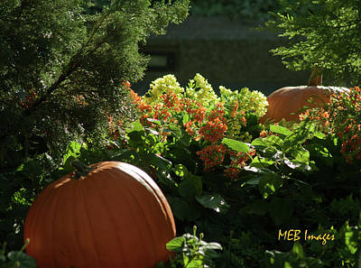Pumpkins In Autumn Poster by Margaret Buchanan