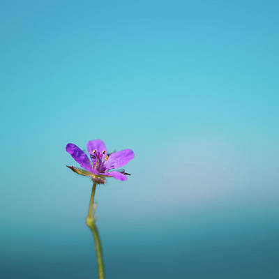 Puple Flower Against Sea & Sky Blurred Background Poster by Alexandre Fundone