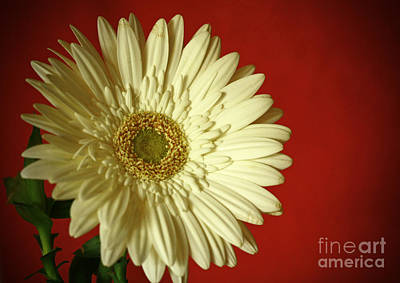Purity And Passion Poster by Inspired Nature Photography Fine Art Photography