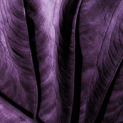 Purple Elephant Leaf Poster by Bonnie Bruno