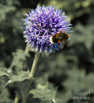 Purple Flower And Bee Poster