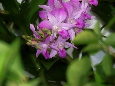 Purple Orchids Poster by Dumindu Shanaka