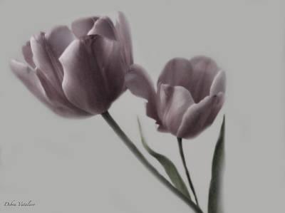 Putty Pale Tulips  Poster by Debra     Vatalaro