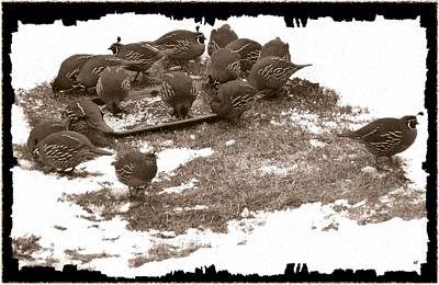 Quail Having Lunch Poster by Will Borden