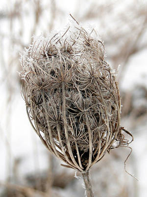 Poster featuring the mixed media Queen Anne's Lace Seed Pods by Bruce Ritchie