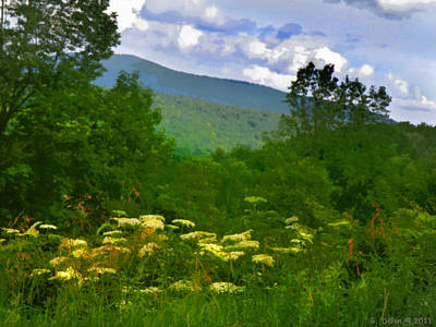 Queen Anne's Lace With A View Poster