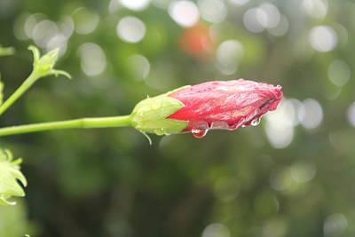 Raindrop Tears Poster