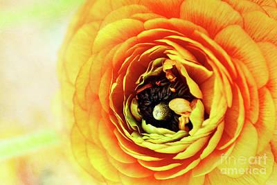 Ranunculus In Orange Poster