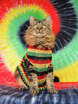 Poster featuring the photograph Rasta Cat by Joann Biondi