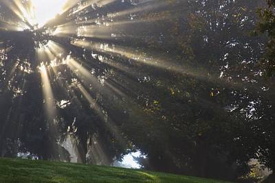 Rays Of Sunlight Through The Trees And Poster