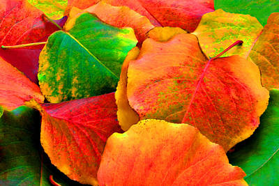 Really Colorful Fall Leaves Poster
