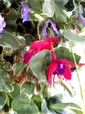 Red And Purple Fuschia Blooms Poster by Elaine Plesser