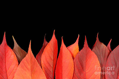 Red Autumn Leaves On Edge Poster