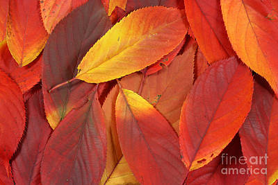 Red Autumn Leaves Pile Poster