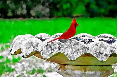 Red Bird In Bath Poster by Tom Culver