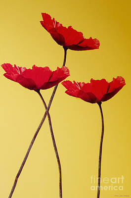 Red-flowered Corn Poppies Poster by MaryJane Armstrong