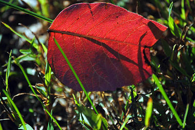 Red Leaf On Green Poster