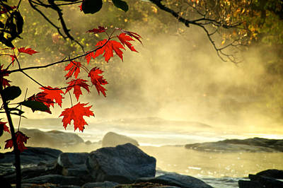 Red Maple Leafs In Fog Poster