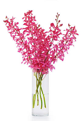 Red Orchid In Vase Poster by Atiketta Sangasaeng