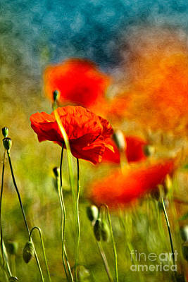 Red Poppy Flowers 01 Poster by Nailia Schwarz