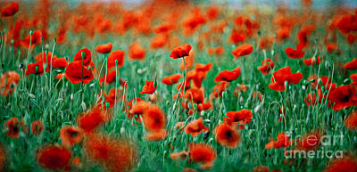 Red Poppy Flowers 04 Poster by Nailia Schwarz