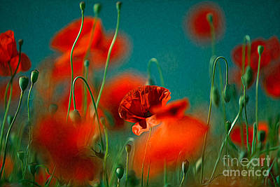 Red Poppy Flowers 05 Poster by Nailia Schwarz