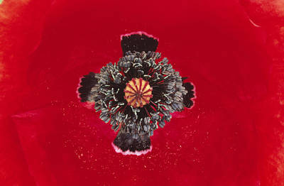 Red Poppy Papaver Rhoeas Close Poster by Duncan Usher