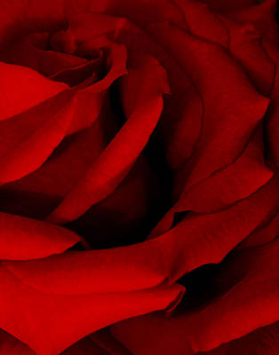 Red Red Rose Poster