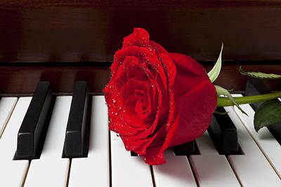Red Rose On Piano Poster by Garry Gay