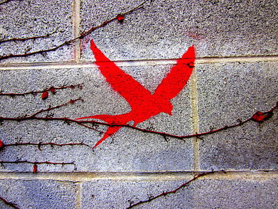 Red Swallow By Laura Gomez Poster by Laura  Gomez