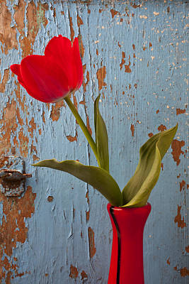 Red Tulip Bending Poster by Garry Gay
