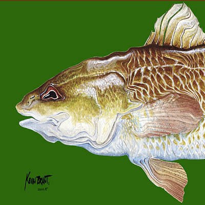 Redfish Headach Poster by Kevin Brant