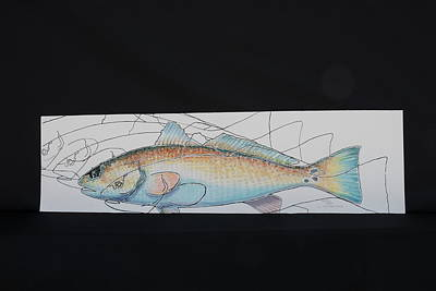 Redfish Poster by Pat Joiner