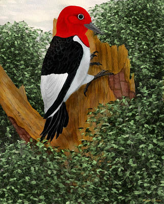 Poster featuring the painting Redhead Woodpecker by Walter Colvin