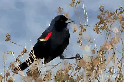 Redwing Blackbird Poster by Betty LaRue