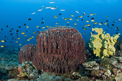 Reefscape With Sponges And Schooling Fish Poster