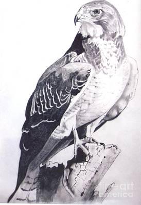 Regal Hawk  Poster by John  Tukey