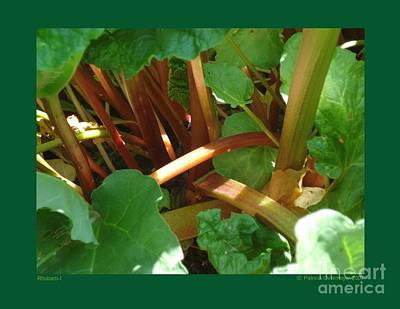 Poster featuring the photograph Rhubarb-i by Patricia Overmoyer