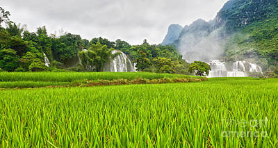 Rice Field And Waterfall Poster by MotHaiBaPhoto Prints