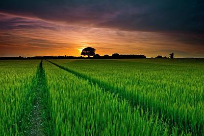 Rice Field At Sunrise Poster by Andreas Jones